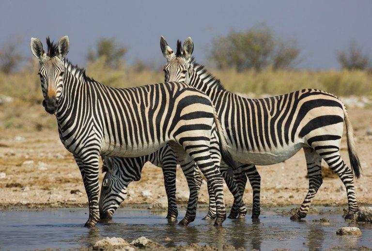 Namib-Naukluft-Park-(2)