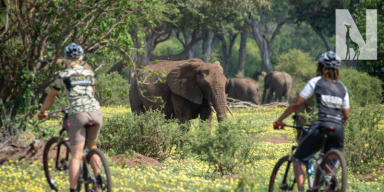 Mashatu-MTB-Safari