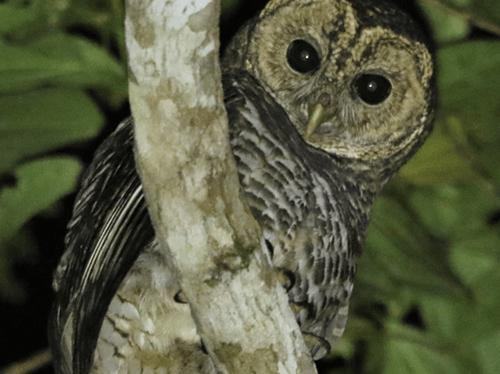 Nature Travel Birding