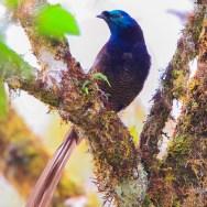 Birding in Asia with Nature Travel Birding