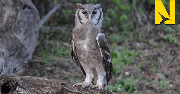 Magical Birding in the Northern Kruger