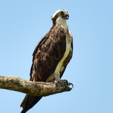 Vic Falls Birding