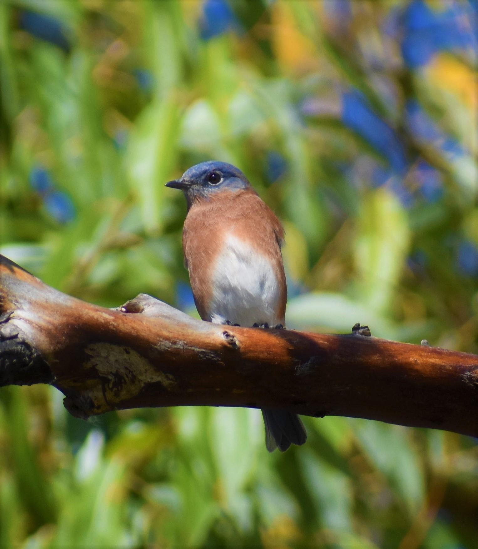 Birding Saginaw Bay
