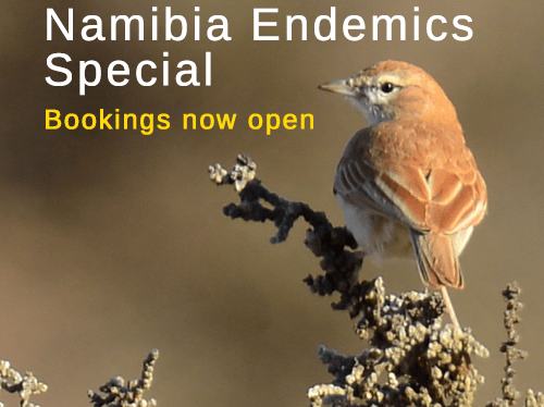 4 Day Namibia Endemics Special