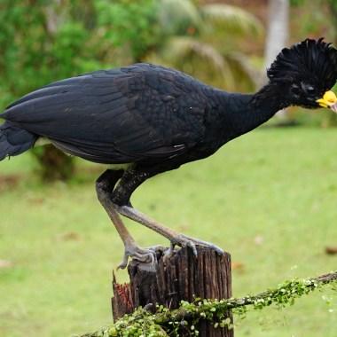 Costa Rica Birding
