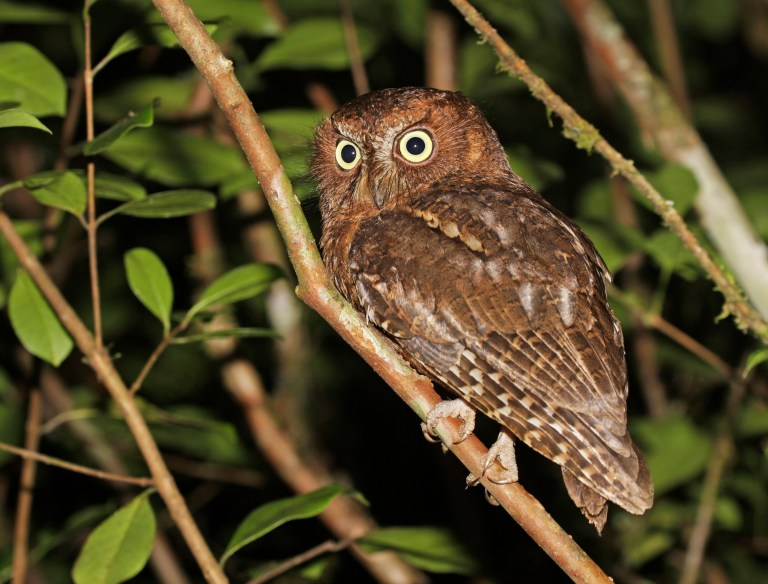 Birding in Madagascar