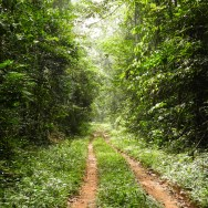 Ankasa Forest Reserve (12)
