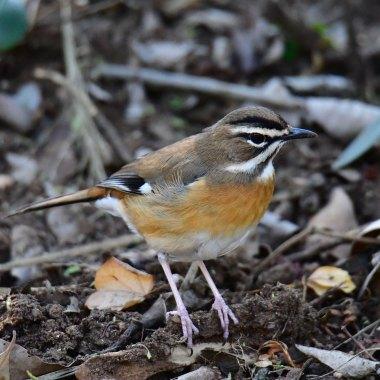 Eastern South Africa Birding