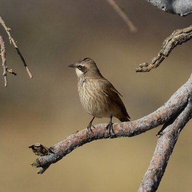Birding in Namibia Botswana and Zambia