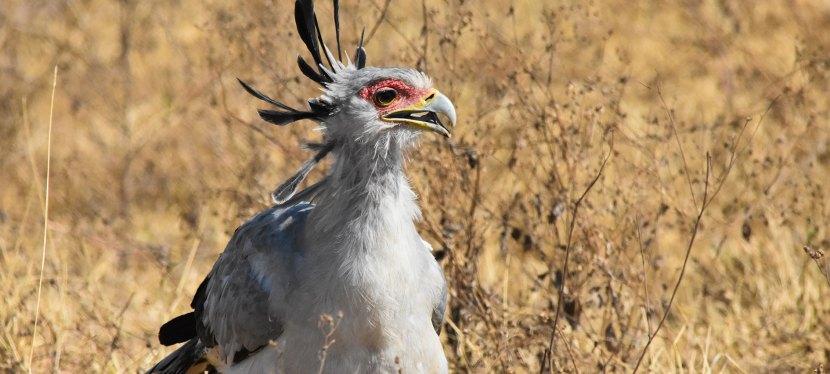 Our Birding videos