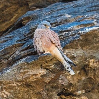Birding in Windhoek