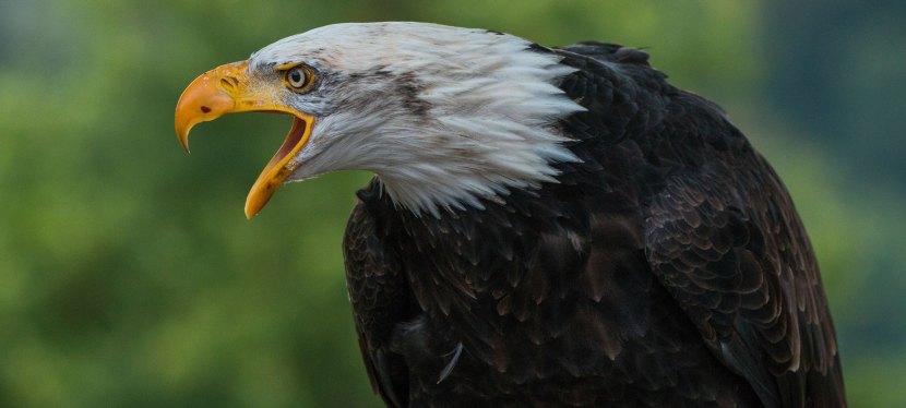 Florida Winter Birding