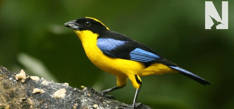 Birding in Ecuador with Will Haffey