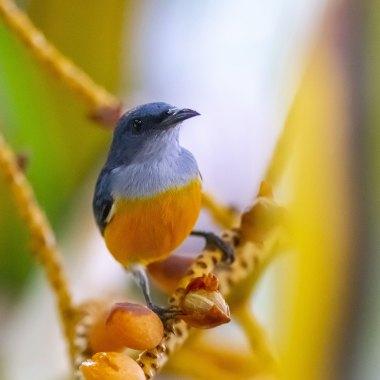 Borneo Birding Tour