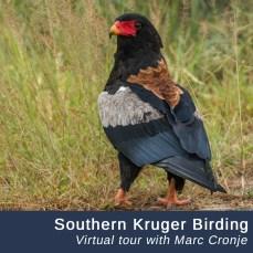 Southern-Kruger-VT
