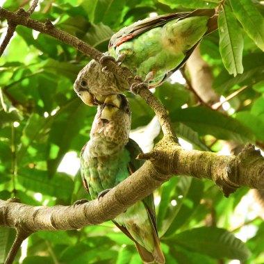birding in zambia