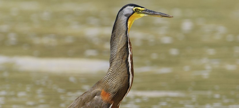Honduras Birding Tour