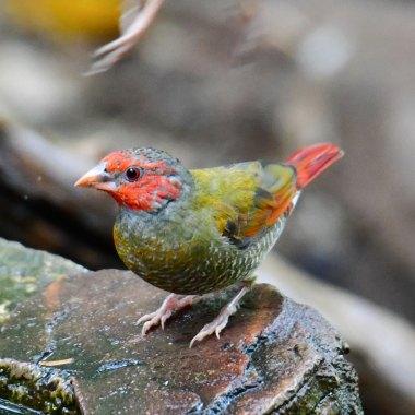 Mega South Africa Birding