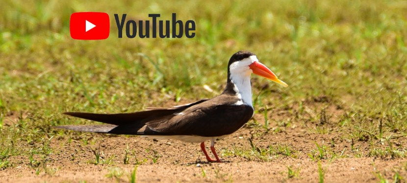 About Nature Travel Birding