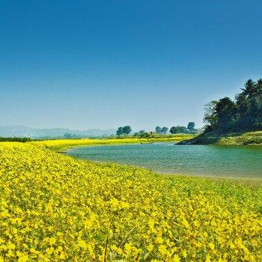 Assam-scenery