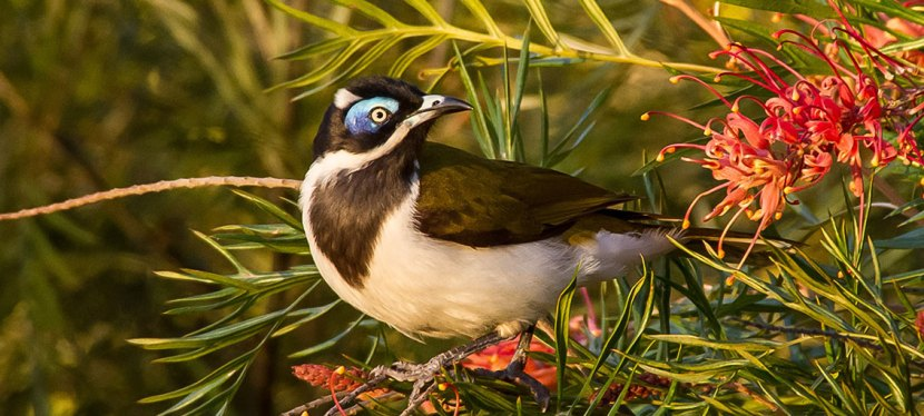 Sydney Short & Day Birding Tours