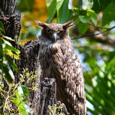southern india birding