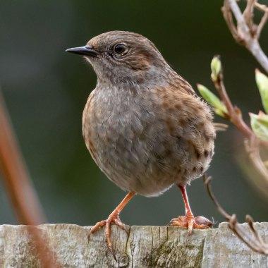 Birding in New Zealand