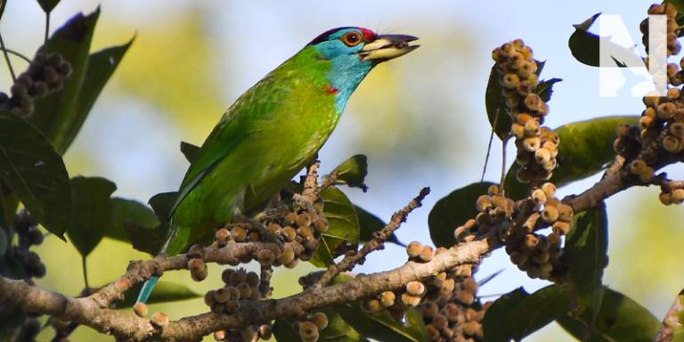 North India Birding