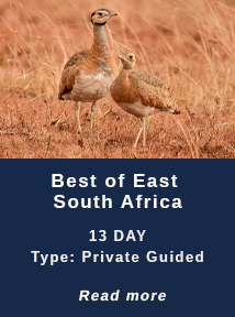 Best-of-East-SA