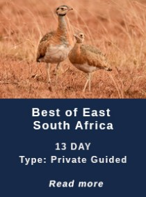 Birding Tours South Africa