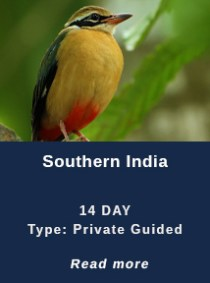 Southern-India