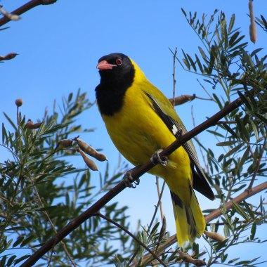 Birding Western Cape