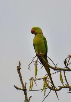 North-East India Birding