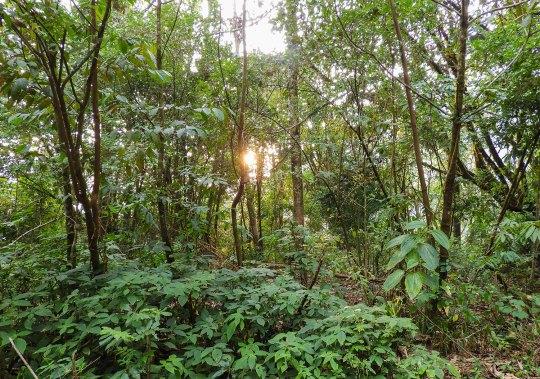 Eaglenest-Sanctuary-Forest