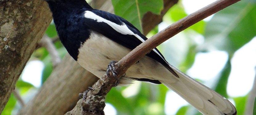 Sri Lanka Birding