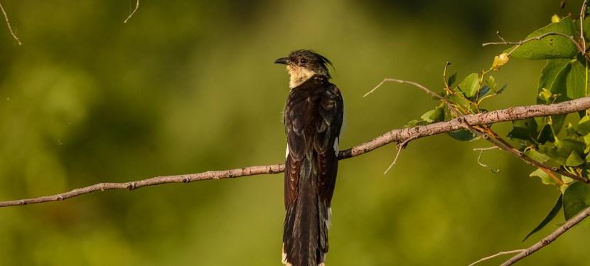 Best of East Birding