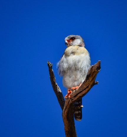 Namibia Birding Trip Report