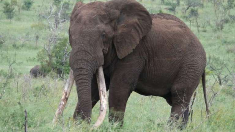 The story of Duke with Nature Travel Kruger