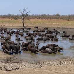 Crowded waterhole