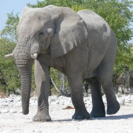 Etosha National Park with Nature Travel Namibia