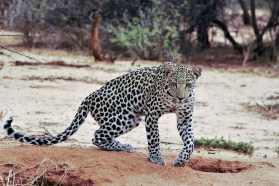 Travel to Namibia