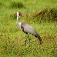 Bwabwata National Park with Nature Travel Namibia