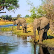 Bwabwata National Park with Nature Travel Namibia