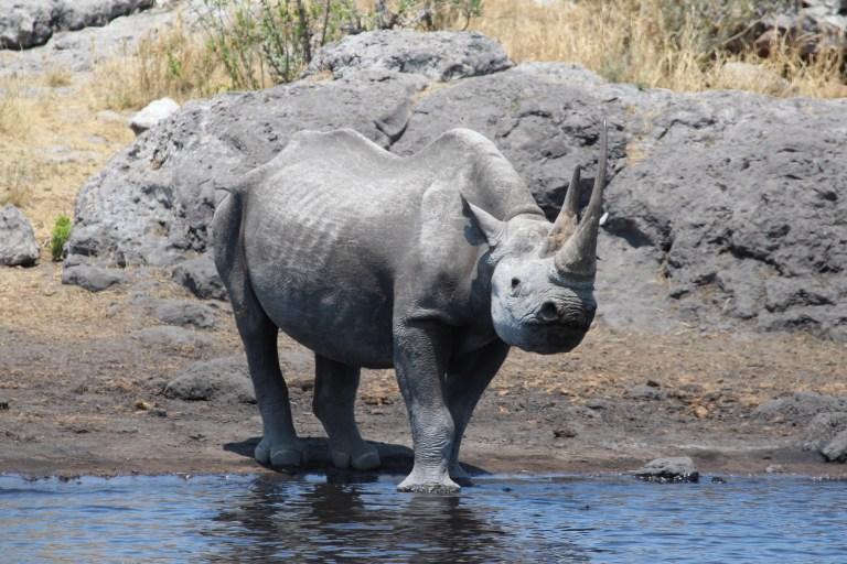 Black Rhino (4).JPG