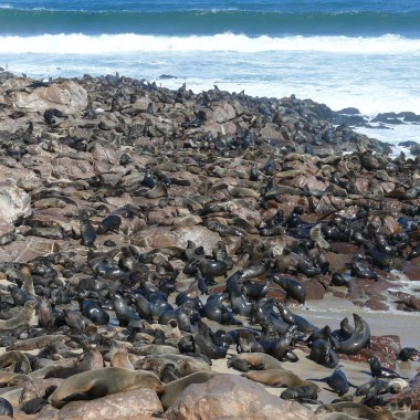 Cape Cross Seal Reserve (2)