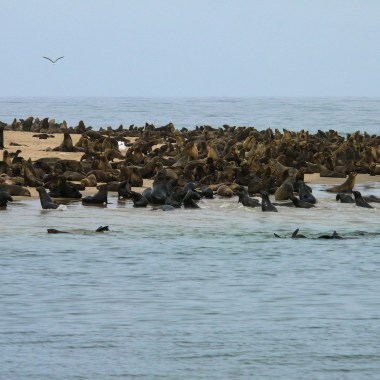 Cape Cross Seal Reserve (4)