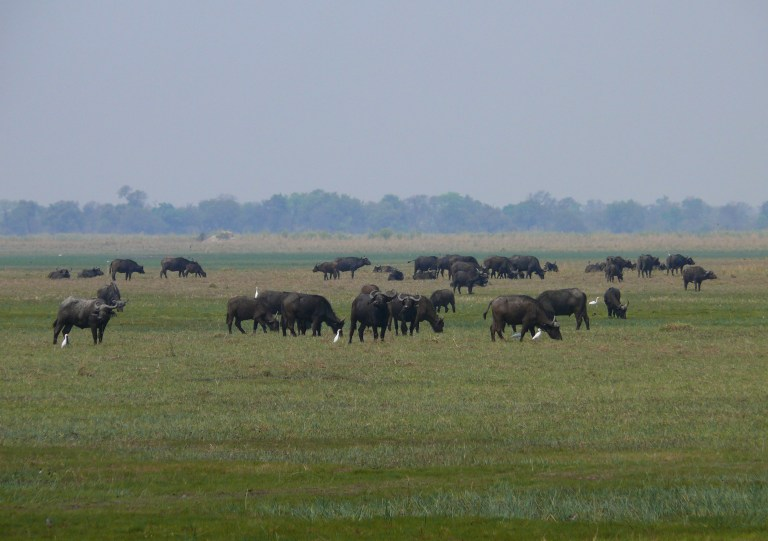 Mudumu NP, Namibia (8).jpg