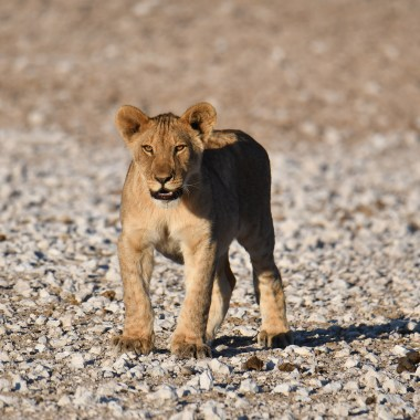 Visit Etosha with Nature Travel Namibia