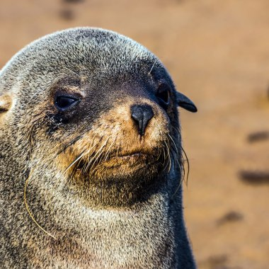 Cape-Cross-Seal-Reserve-(2)