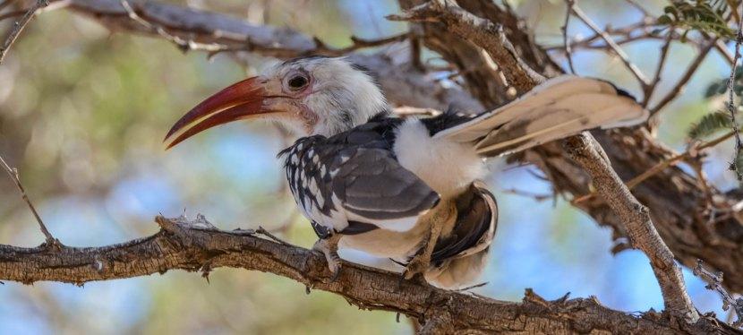 4 Day Namibia Endemics Birding